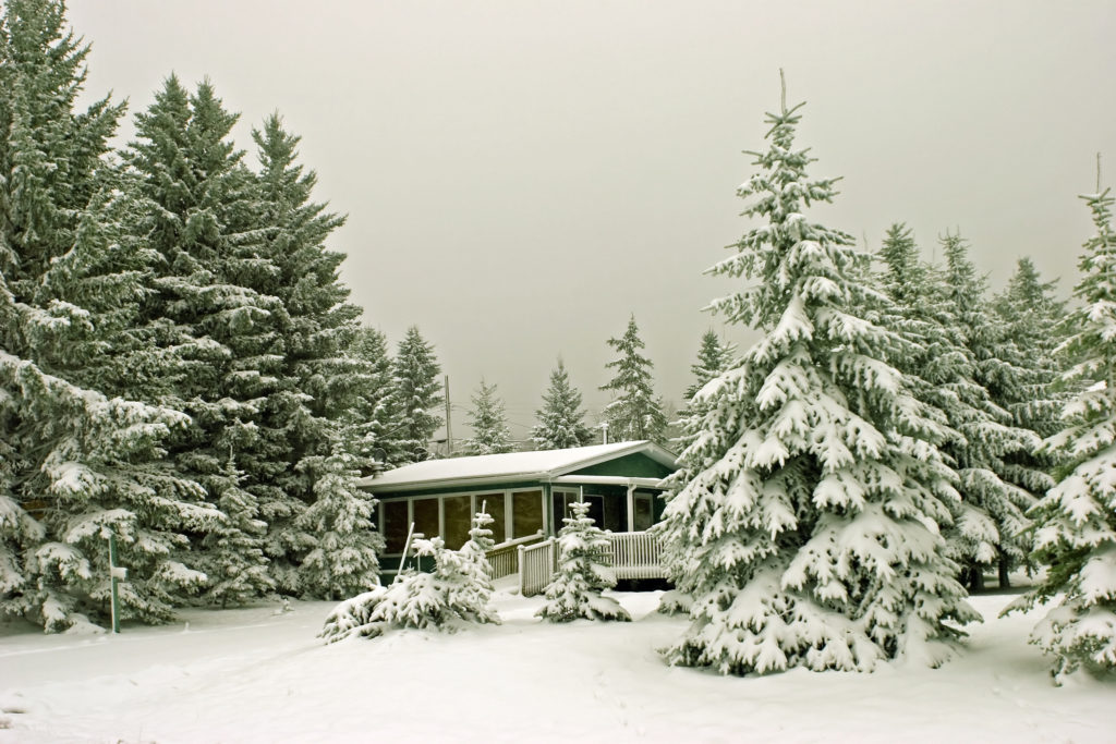 a snowy scene featuring a log cabin tucked among pine trees
